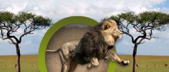 Интернет площадка Животный мир